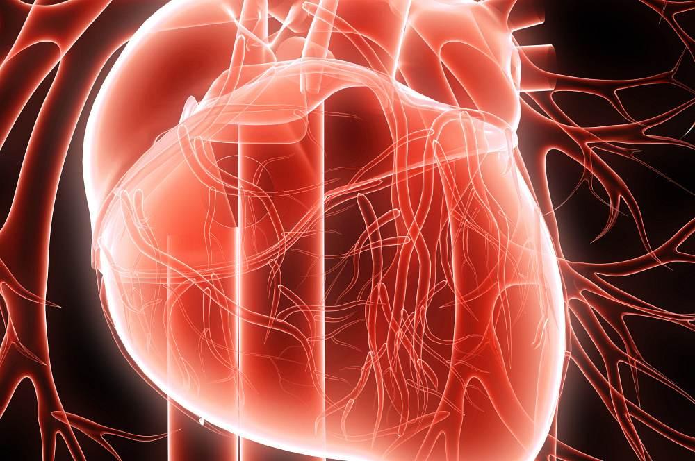 srdce-cevy-grafika-detail