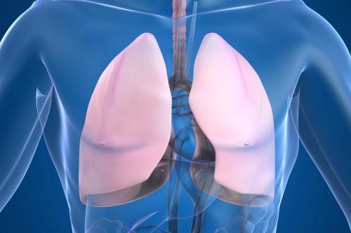 lidské plíce
