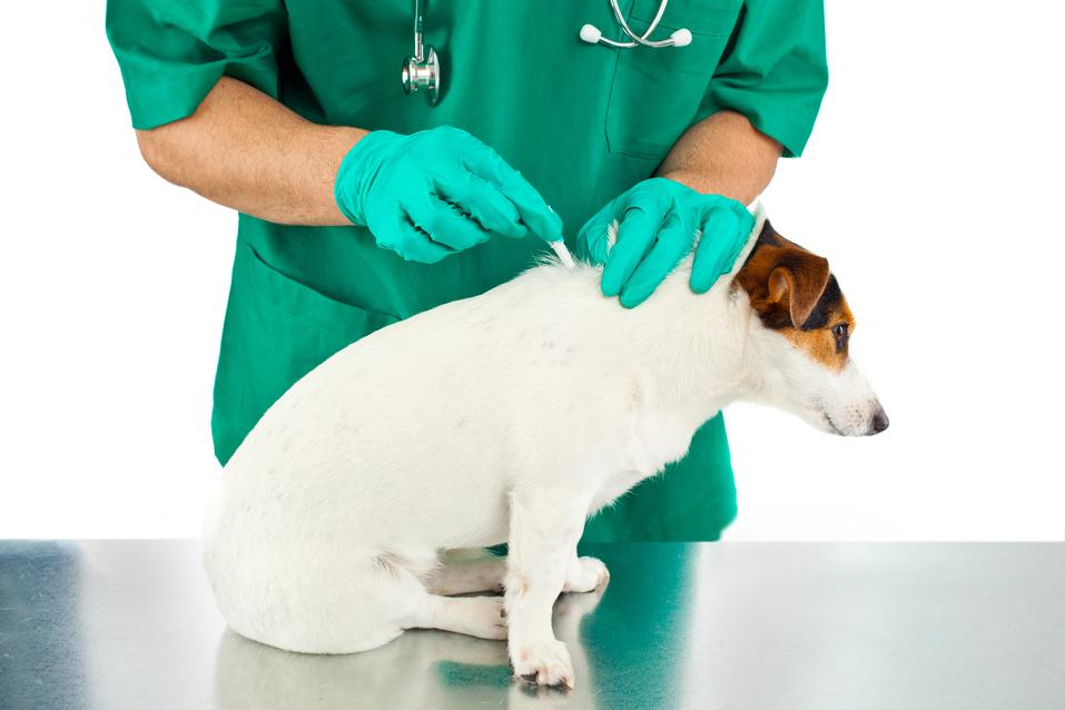 pejsek u veterináře
