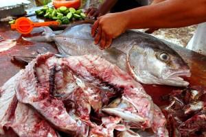 rybí zápach