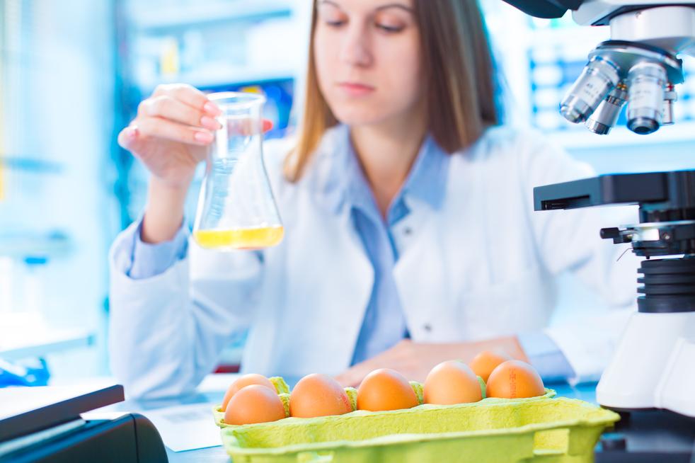 salmonella v laboratoři