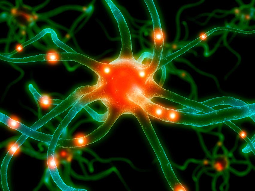 neuronové synapse