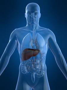 játra uložení jater v těle a možné jaterní nemoci