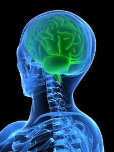 mozek mozkový trénink